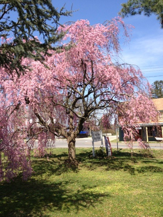 Spring Has Sprung at Sassi Italy Tours World HQ