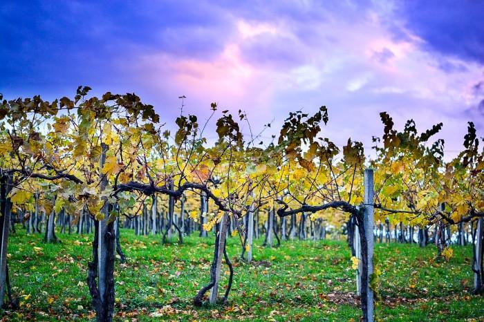 rodello vines (36 of 1)