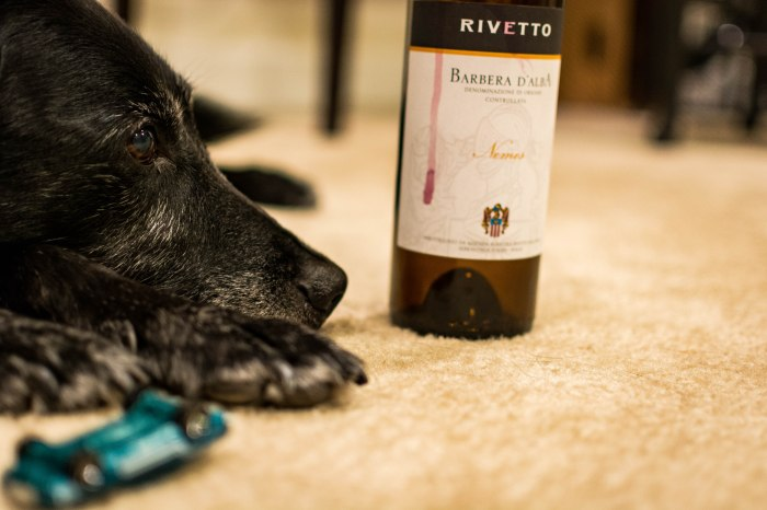 Dogwine2 (36 of 1)